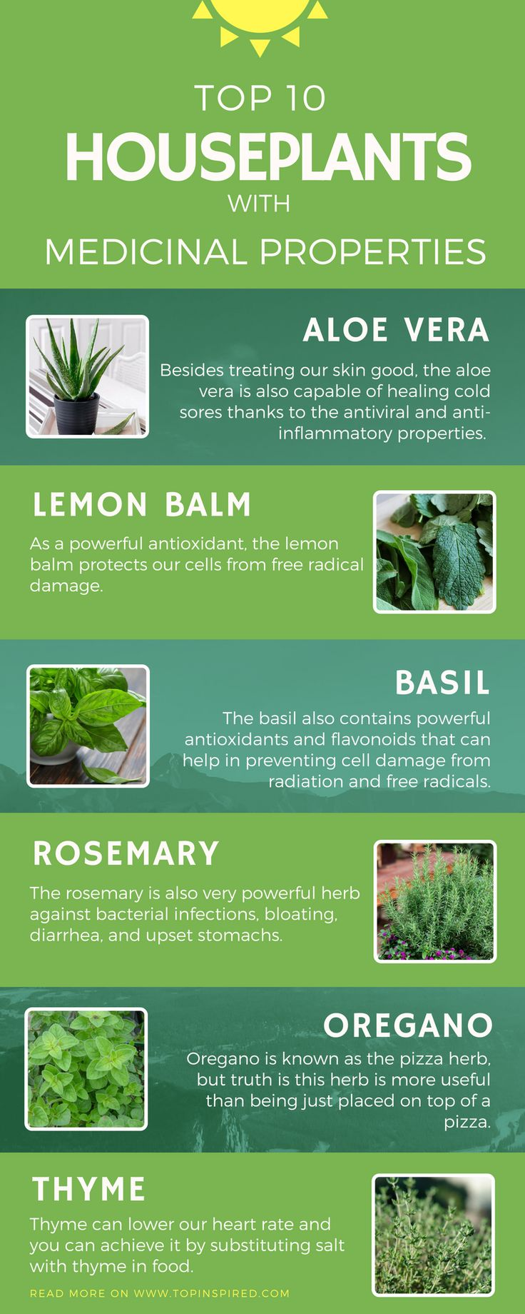 From aloe vera to oregano, we present you ten plants that not only we'll be the perfect little detail to any room, but you can later use them for various medicinal reasons (don't use anything before consulting a doctor). Wondering how these plants can help you? Read along.