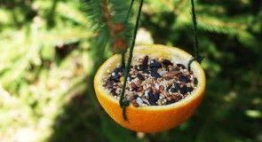 Jednoduché krmítko pro ptáčky z pomeranče