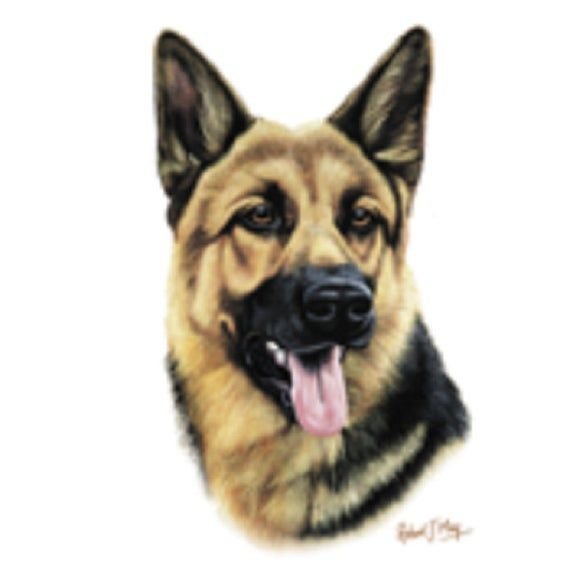 German Shepherd Dog Head On Twelve
