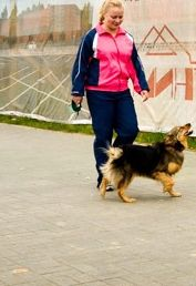 Slim without sports? It is possible. Do you have a dog? If not that's okay, too,  you can get help from your friends, they will not refuse. By the way, it will do great if you become not just a passive overseer, and take part in games and jogging mischievous pet.