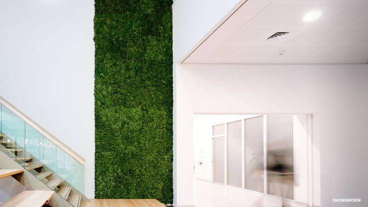Een moswand hoeft niet uw hele muur te bedekken een for Interieur bedrijf