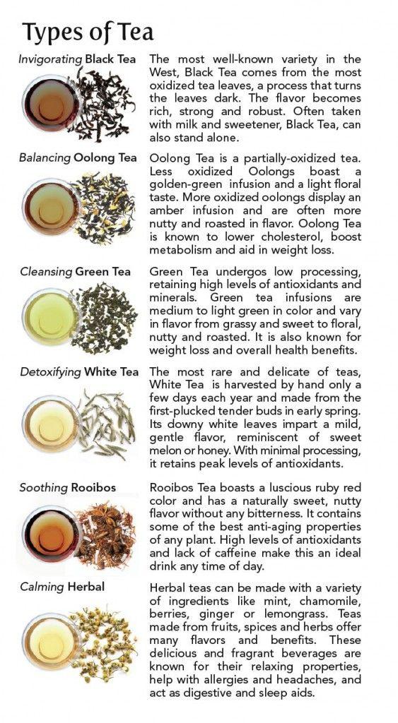 Different Types of Tea   Tea 101: Types of Tea