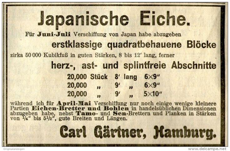 Original-Werbung/ Anzeige 1907 - JAPANISCHE EICHE / CARL GÄRTNER HAMBURG  - ca. 110 x 70 mm