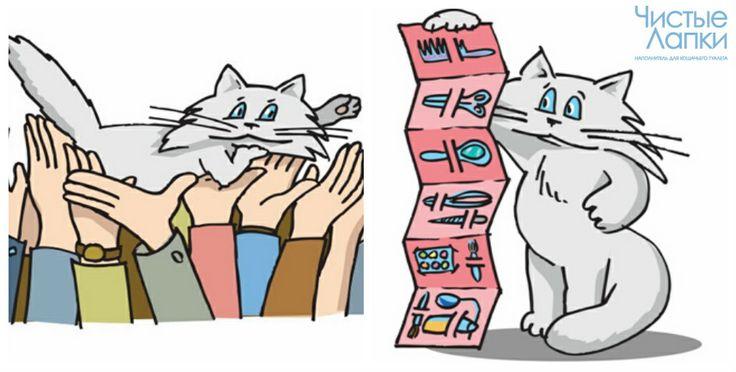 Выставки кошек: Этапы подготовки  Кошки совсем как люди: почти все аспекты нашей жизни присутствуют и в жизни наших пушистых друзей ― среди них есть даже артисты! Конечно, они не поют песен и не танцуют, но внимание к ним приковывается и без этих усилий. Как вы уже могли догадаться, речь идет об участниках кошачьих выставок. В этот раз «Чистые лапки» расскажут, как подготовить любимца к столь важному мероприятию…