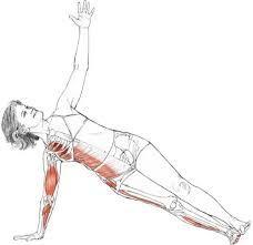 Best 25+ Plank Muscles ideas on Pinterest | Planks, Planking ...