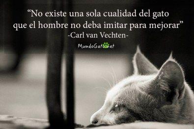 Imagenes+De+Gatos+Con+Frases+Para+Compartir