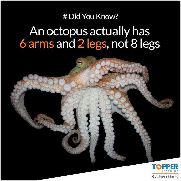 #DidYouKnow An #octopus actually has 6 arms and 2 legs, not 8 legs! #Facts