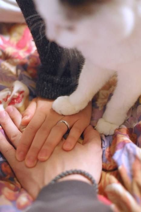 I realize everyone has been pinning wedding pictures with their dogs, but can I please have one with my kitty?? :]