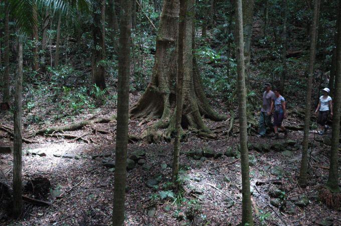 Rainforest Circuit Mt Glorious