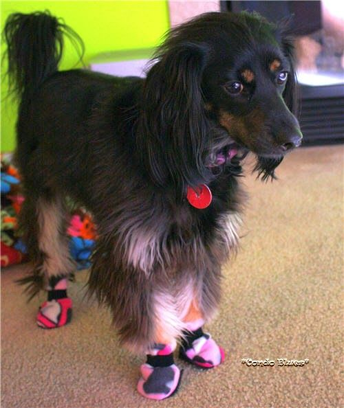 How to make fleece dog boots for winter, can't you also use waterproofing spray on fabric?