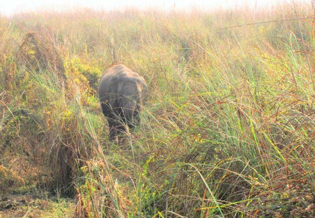 На слонах в джунгли