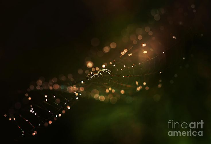 Golden Web Photograph by Jaroslaw Blaminsky