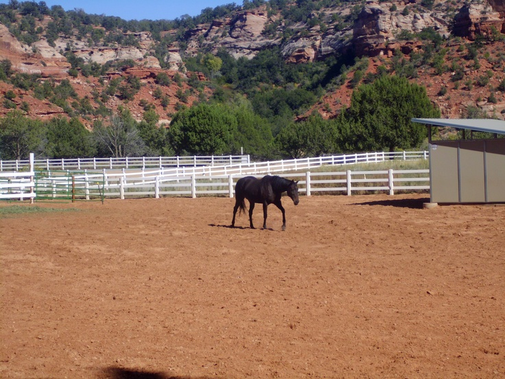 Horse In Angel Canyon Best Friends Animal Society Kanab Utah October 2017