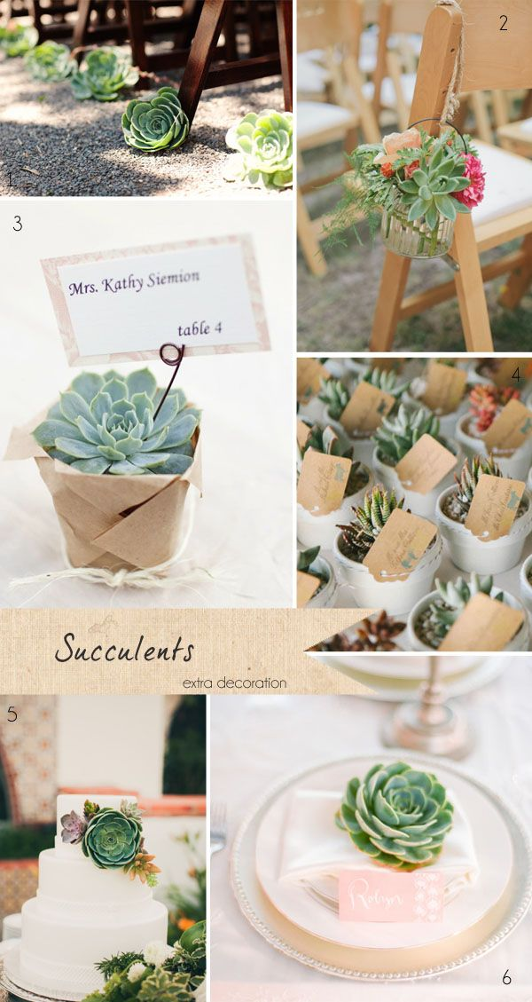 Wedding Bells Decorations 53 Best Succulents For Wedding Flowers And Decor Images On