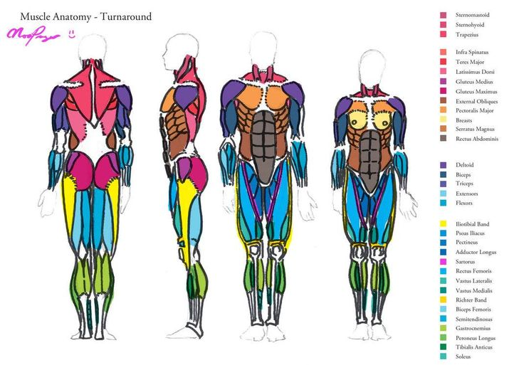 1000+ images about Anatomy: full figure on Pinterest ...