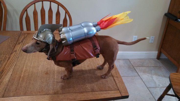 Harley the Rocket Dog