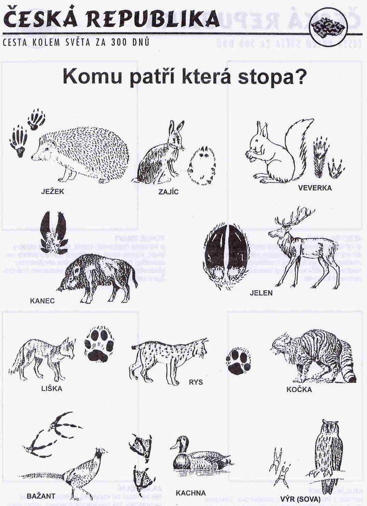 zvířátka
