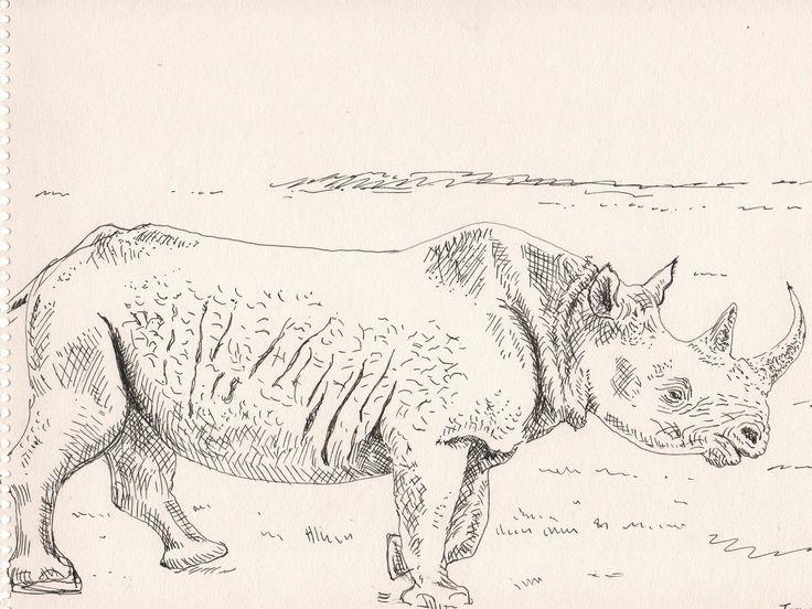 Rhinoceros - Ink drawing -1992 (1600×1201) - Claus Ib Olsen
