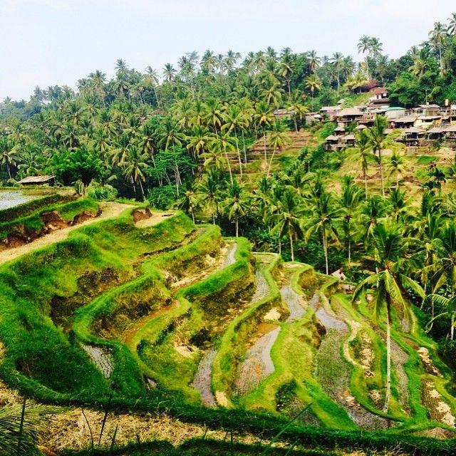 Bali is amazing. #beautiful #bali #green #riziera #exotic #inspiration