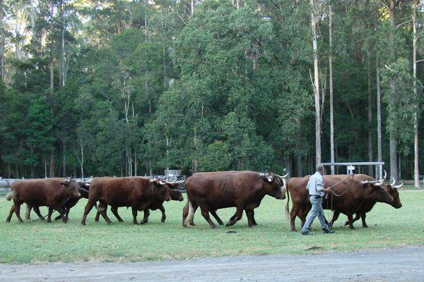 Wauchope NSW - Timbertown