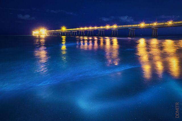 93 best images about deerfield beach florida on pinterest for Deerfield beach fishing pier