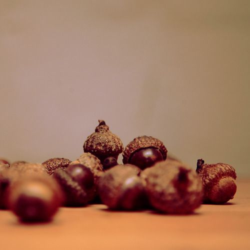28 best images about acorns diy acorn craft ideas on pinterest polymers christmas tree - Acorn and chestnut crafts ...