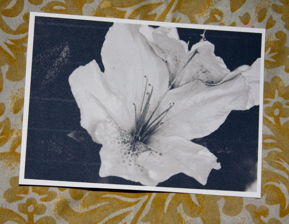 Black and White flower Postcard by amberroyaltyboutique on Etsy, $2.50