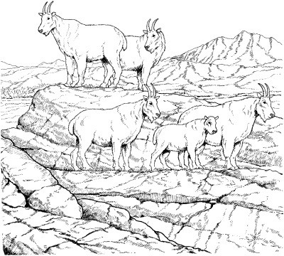 Mountain Goat Herd Coloring Page From Category Select 24948 Printable Crafts Of Cartoons Nature Animals Bible And Many More