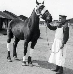 This is Nelson, a real war horse that fought in WW1 along side his human, Alfred Henn. Until his death in 2000, Alfred kept a photograph of his war horse he had cherished as a young soldier.