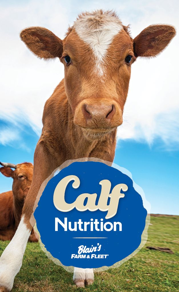 When It Comes To Healthy Calves Trust The Animal Experts At