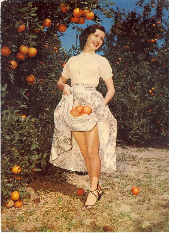 Vintage Florida Postcard - Florida Beauties Cheesecake in Orange Grove JUMBO POSTCARD