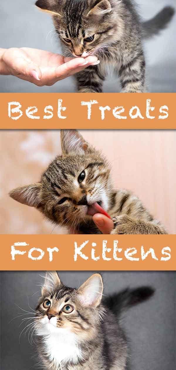 Best Treats For Kittens Kittens Kitten Treats Kitten Care