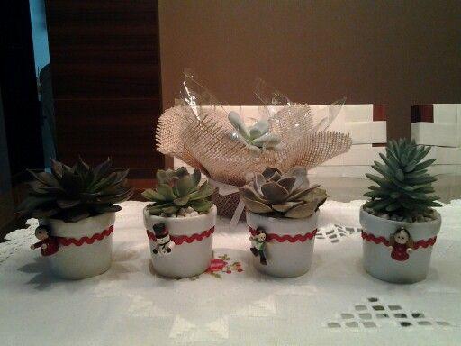 Mimosas suculentas de natal