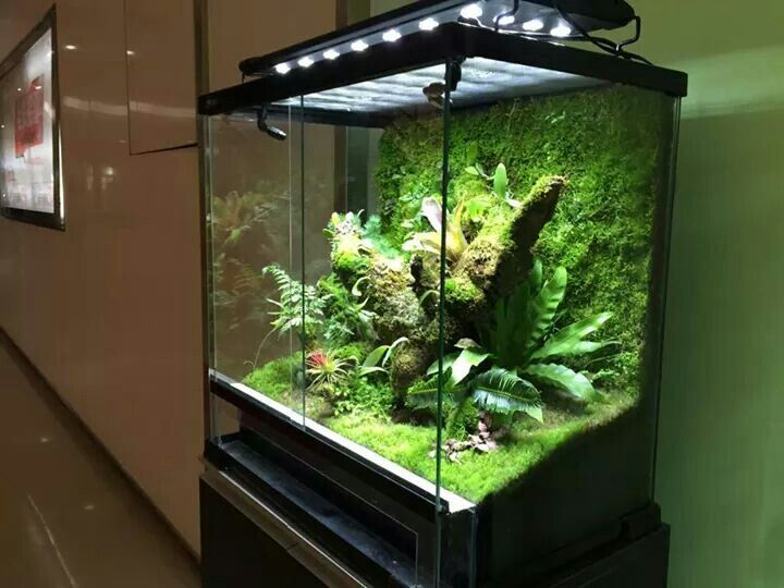 1000 Ideas About Gecko Vivarium On Pinterest Crested