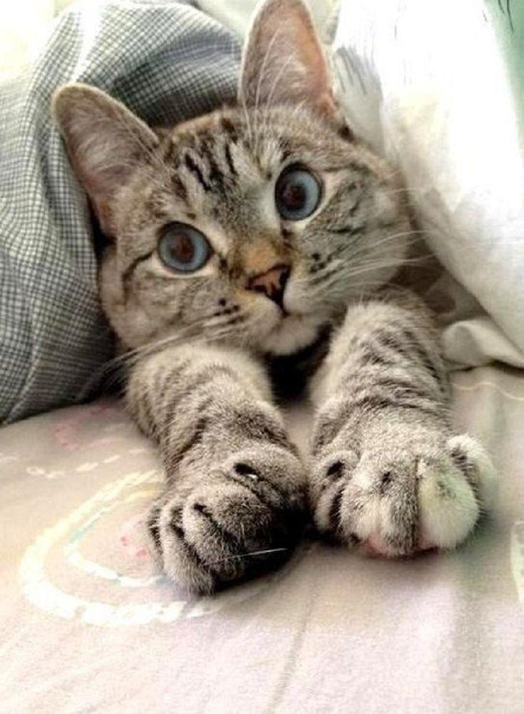 Котенок с добрым утром фото картинки