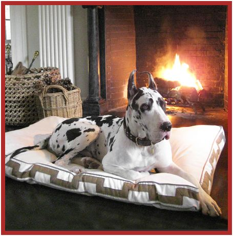Black White Spotted Harlequin Breed Great Dane On Bed
