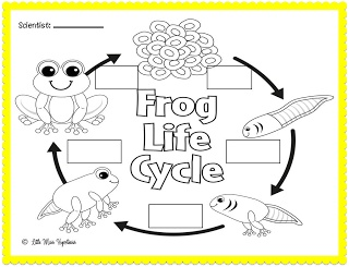 Little Miss Hypothesis - Lessons from the Science Lab: Feeling Froggy! Freebie!