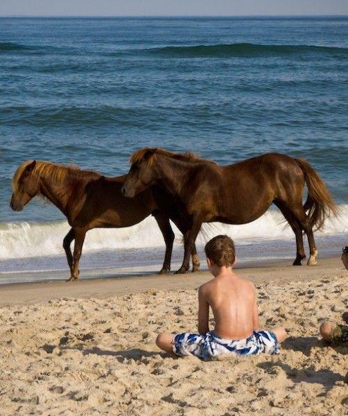 Ateague Island Maryland Wild Horses On The Beach Pinterest Animalaryland