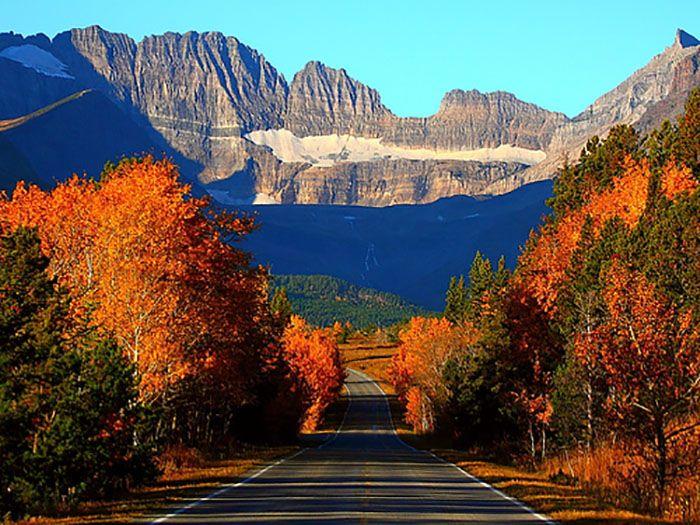 Birch Tree Fall Wallpaper Glacier National Park Montana Most Breathtaking