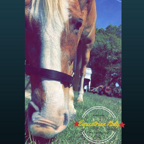 Una mosca può pungere un cavallo maestoso e farlo trasalire, ma quella è soltanto un insetto, e questo, pur sempre un cavallo. Samuel Johnson, in James Boswell, Vita di Samuel Johnson, 1791   #cavallo #horse #equitazione #roma #horseRidingholidaysineurope #horsebacktrails #riding #horseridingvacations #horseridininitaly