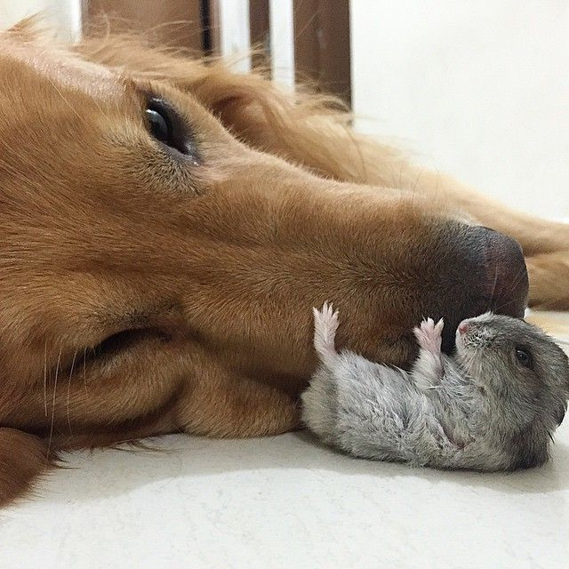 um-cachorro-oito-passarinhos-e-um-hamster-são-os-amigos-mais-incomuns-18