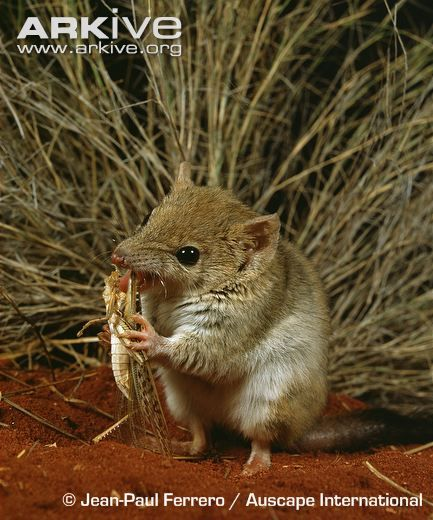 49 Best Images About Australian Mammals On Pinterest