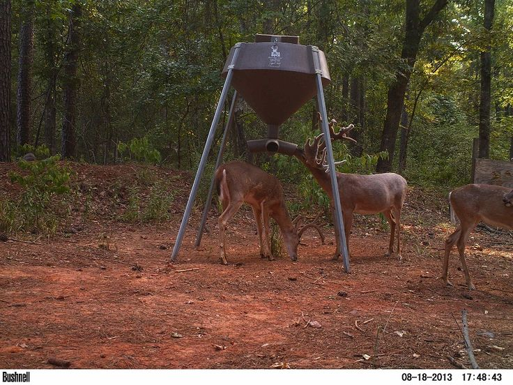 17 Best Ideas About Gravity Deer Feeders On Pinterest