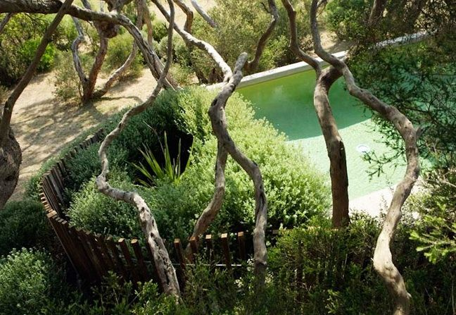 pool fencing and contained garden. Fiona Brockhoff Design
