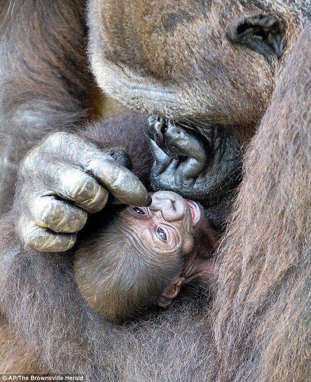 Mama affection...