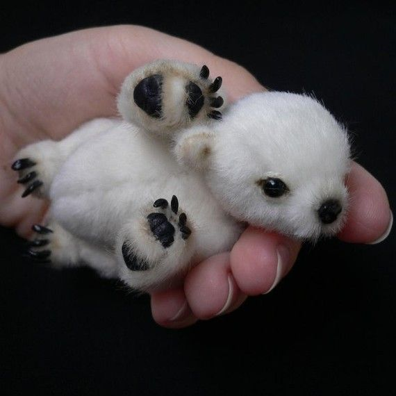 New born Polar bear, just to think he's gonna get ...