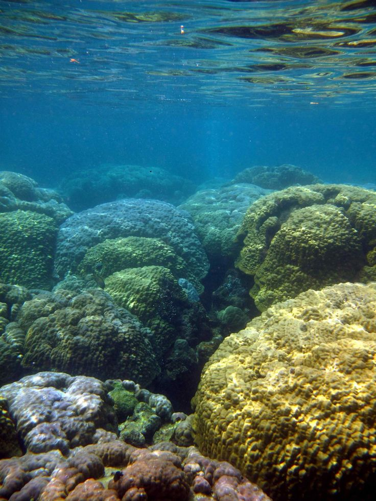 """Ocean acidification is sometimes called """"climate change's equally evil twin,"""" and for good reason: it's a significant and harmful consequence of..."""
