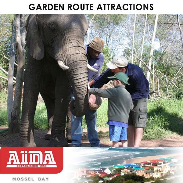 When you buy property in the Garden Route, you will have so much to do and see that are close buy. Elephant Sanctuary, The Crags, Plettenberg Bay, has African elephants and offers an interactive elephant experience, elephant back riding and overnight accommodation. We offer hands-on educational elephant interactions. This provides our guests with a far more intimate experience with the elephants.  #property #attractions #gardenroute