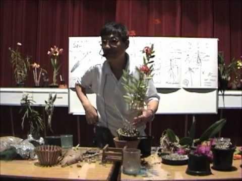 Curso básico de cultivo de Orquídeas - Parte 3 - YouTube
