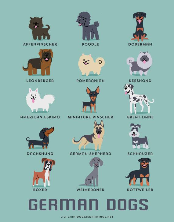 GERMAN DOGS art print dog breeds from Germany by doggiedrawings, $10.00